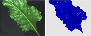 Detected diseases on a sugar beet plant leaf